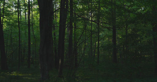 4K - slow moving along the magical green forest Live Action