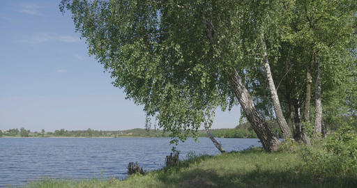 4K - approaching the lake, birches are located on the shore in slow motion Footage