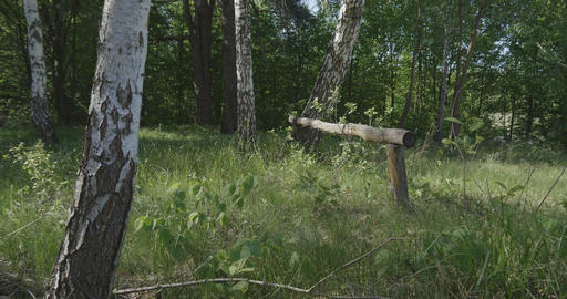 4K - drop on the grass along a group of birches in a beautiful forest Footage