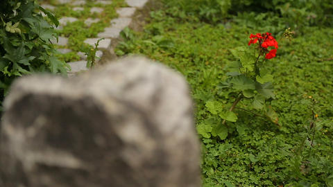 Bright flower rising among stones, showing contrast between pure life and death Live Action