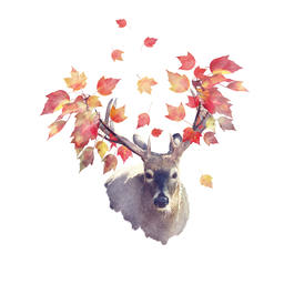 Deer male with autumn leaves Photo