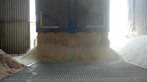 Corn Unloading into the Grain Elevator Live Action