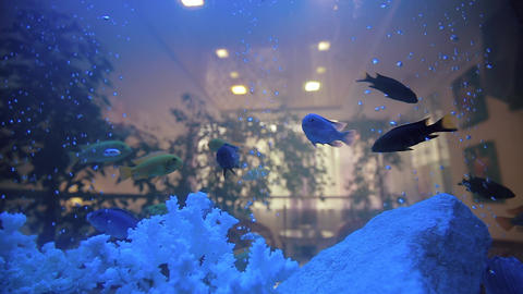 Aquarium Fish Tank Cora in Home Footage
