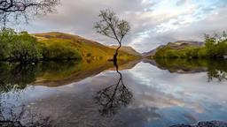 Lone Tree at Llanberis, Snowdonia National Park - Wales,United Kingdom Footage