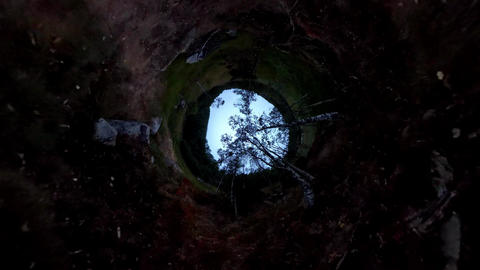 Inverted forest view - Magical fantasy place. Nature from a different view Footage