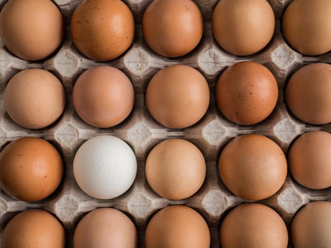 one white egg among brown in the tray Photo