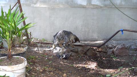Cat caught a bird Stock Video Footage