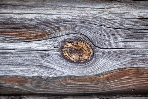 Texture of a wooden log with a knot Photo