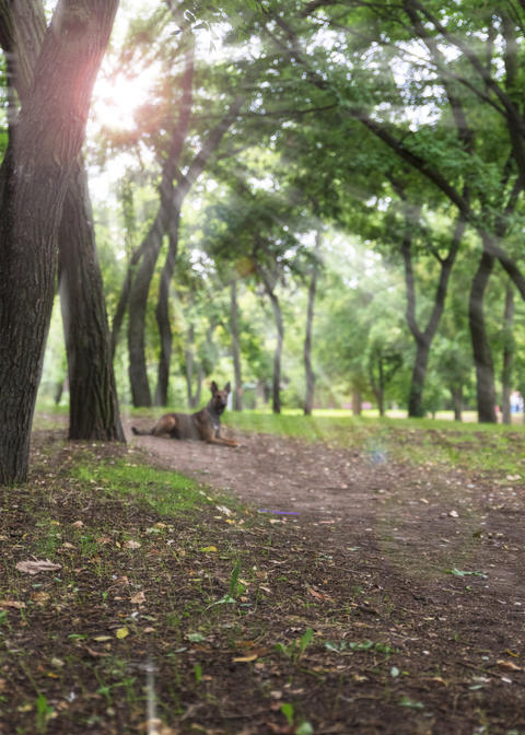 view in the city park of Kherson Ukraine Photo