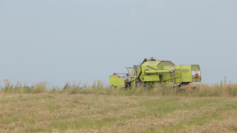Combine green squinting in field cereals in field Live Action