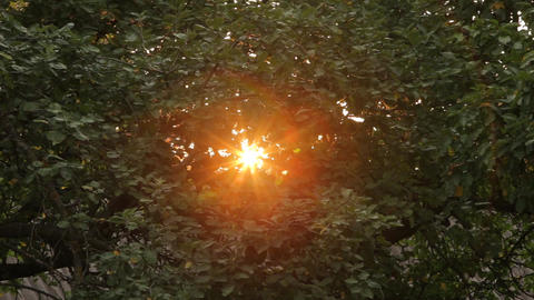 Blick through green leaves and branches of trees Live Action