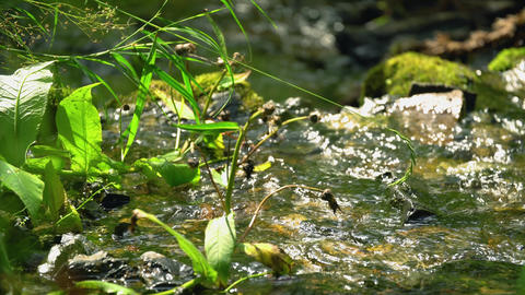 Clean creek in the forest near the waterfall. Summer weather, taiga nature, GIF