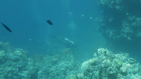 diver swimming near the red sea bed GIF