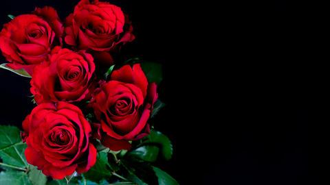 Flowering of roses Stock Video Footage