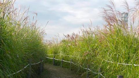 Reed Field Footage
