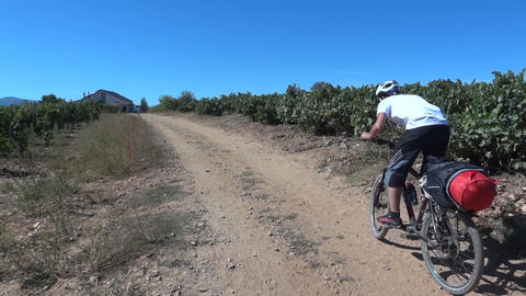 Cyclists go on go hiking on a country road besides a plantation of vines 79 Footage