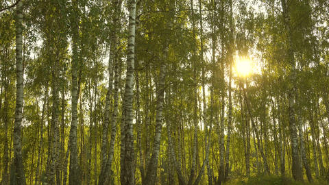 Trees in sunlight, forest at beautiful day Footage