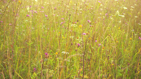 Beautiful wild meadow in pastel tones, fog and sunshine Stock Video Footage
