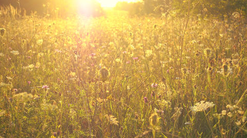 Beautiful meadow in pastel tones, fog and sunshine Footage
