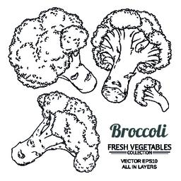 broccoli vector set Vector