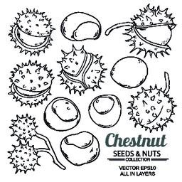 chestnut vector isolated Vector