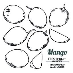 mango fruit vector Vector