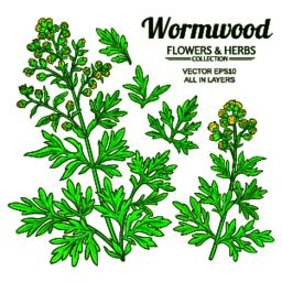 wormwood vector set Vector