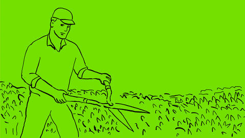 Gardener Trimming Hedge Drawing 2D Animation Stock Video Footage