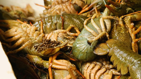 Man choosing crayfish with caviar, traditional seafood cuisine, local market Footage