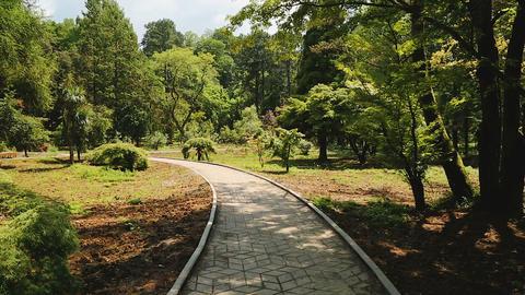 High trees of botanical garden in Batumi, green landmarks, ecological tourism Footage