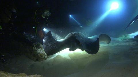 Fascinating and mysterious night dives with sharks and stingrays Live Action
