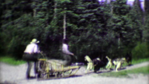 1974: Summer park ranger sled dog demonstration with pack animals Footage