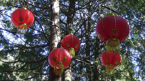 Glowing Lanterns in tree tops.Close up. In shadows Footage