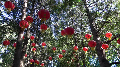 Glowing Lanterns in tree tops.Camera pan right Footage