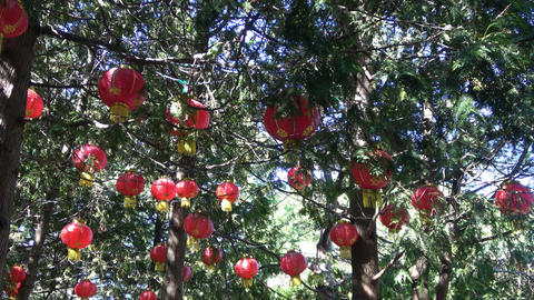 Glowing Lanterns in tree tops. Camera looks up at sky Footage