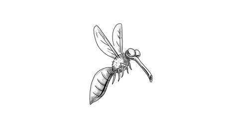 Mosquito Flying Cartoon 2D Animation Animation