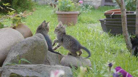 Sweet baby cats enjoying a summer day and nature playing on grass Footage