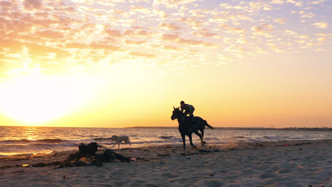 Man rider riding on horse and dog running on sandy beach while morning sunrise Footage