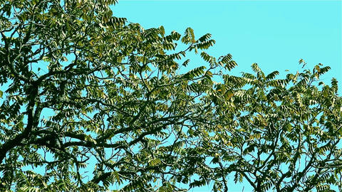 Tree Top With Blue Sky GIF