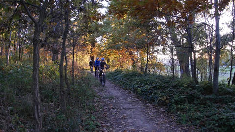 Group of bicyclists going on a driveway through the woods as the sun approaches  Footage
