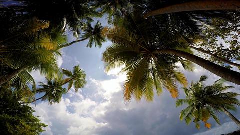 The picturesque, uninhabited island of the Maldives archipelago Footage