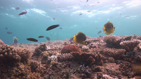 Picturesque colorful coral reef Live Action