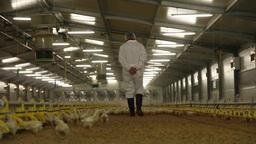 Worker walking in raising chickens farm, slider shot Footage