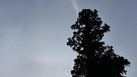 Towering tree ライブ動画