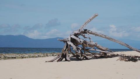 オーストラリア ケアンズ グリーン島 砂浜にある枯れた木 3 Footage