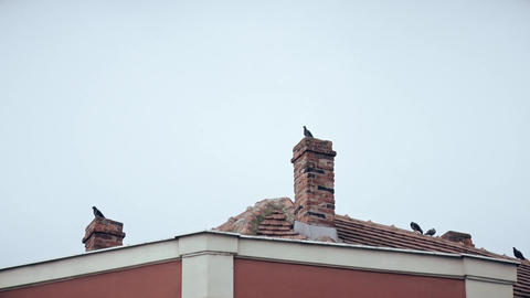 Pigeons stand on the building and rest Footage