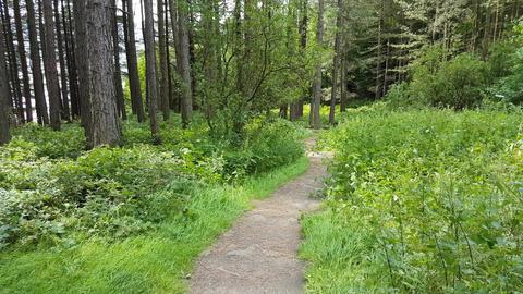 Woodland Paths Footage