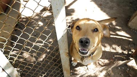A joyful dog jumps straight into the camera. Animal shelter. Slow Motion 영상물
