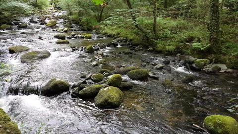 Stream Alongside a Woodland Path Live Action