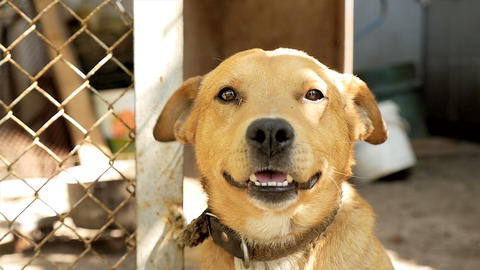 A dog in an animal shelter. pleased face ビデオ